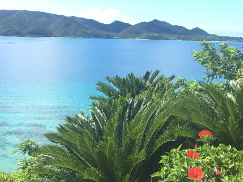 自然多き奄美大島
