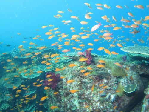 トロピカルな魚の群れ