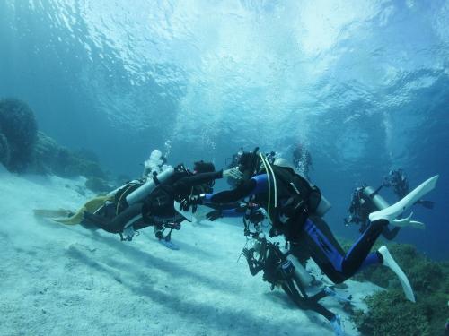 プロが教える【ダイバーになろう ④】体験とライセンス