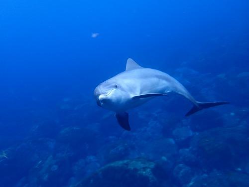 目黒【三宅島2泊3日】三宅島リベンジ!イルカに癒されよう。