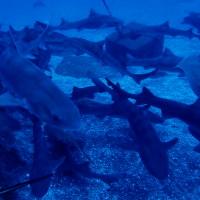 目黒【伊戸日帰り ※変更】自粛ストレスはサメに食べてもらおう♪