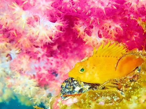 海中生物の花見
