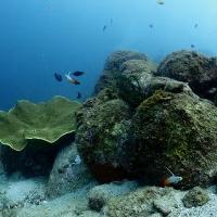 岡山【柏島1泊2日】マクロ生物&フォトダイバー!甲殻類が豊富!
