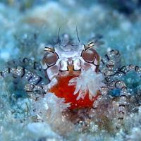 舞子【柏島2泊3日】サンゴもビンゴも盛り沢山!?